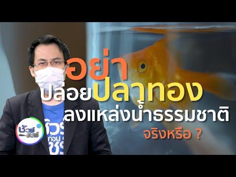ชัวร์ก่อนแชร์ : อย่าปล่อยปลาทองลงแหล่งน้ำธรรมชาติ เพราะจะไปทำลายระบบนิเวศ จริงหรือ ?