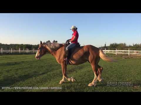 Походки лошадей. Что такое аллюр? Основные виды аллюра. Как передвигается лошадь?