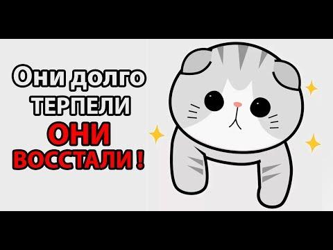 10000000 котов захватывает ВСЕЛЕННУЮ ! ( Kittypocalypse )