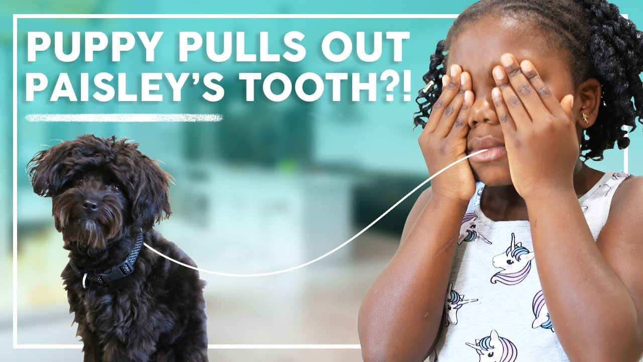 puppy-ash-pulls-out-paisley-s-tooth-behind-the-braids-family-vlog-ep-36