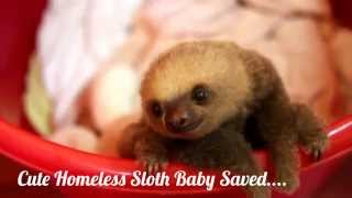 Cute Homeless Sloth Baby Saved....