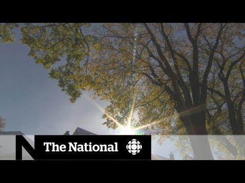 Saving Winnipeg's Urban Forest