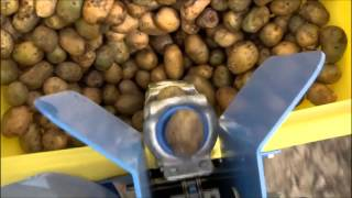 Spedo Potato Planter Available At Everything Attachments