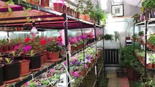 Цветочный дом Алматы. Комнатные цветы(, 2017-11-07T12:22:26.000Z)