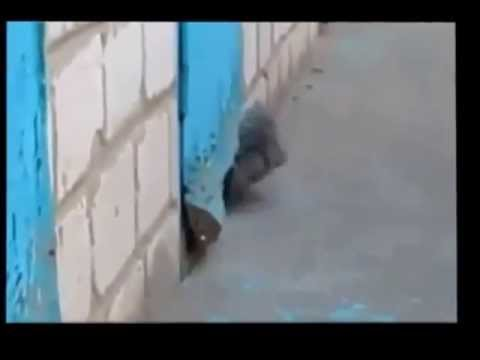a Cat Helps Dog Escape from door