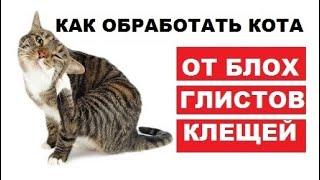 Как обработать кота от клещей, глистов и блох