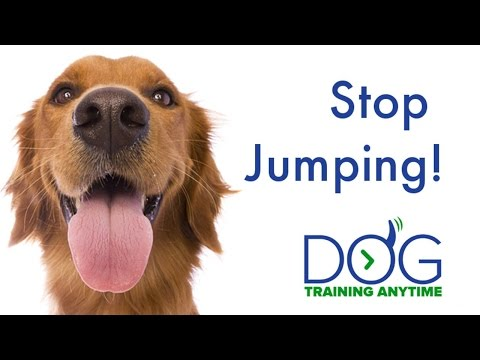 How to stop a dog from jumping on people  -  9