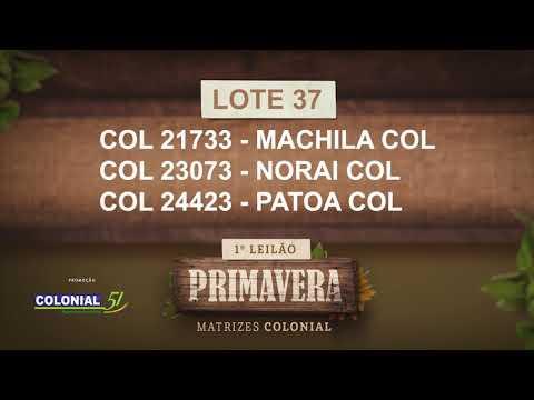 LOTE 37   COL 21733,23073,24423