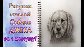 Как нарисовать собаку быстро. Смешная собака ретривер. Рисунок карандашом. Урок рисования.