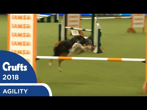 Agility - Kennel Club Novice Cup Final (Jumping) Part 1 | Crufts 2018