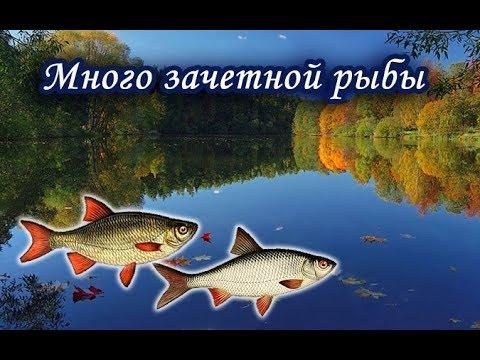 Много зачетной рыбы на Озере. Русская Рыбалка.