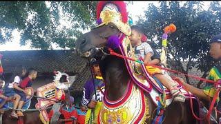 Kuda Renggong C Merang Menyerang Tujuh Hari Tujuh Malam | smart horse dancing