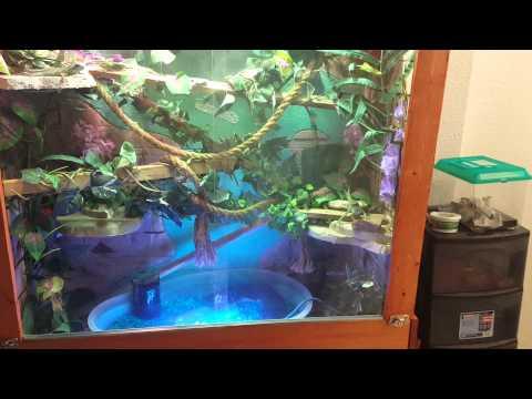 Large Chinese Water Dragon Enclosure Part 1