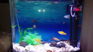 12 gallon 40 liter freshwater fish tank