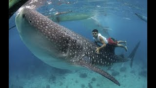 Top 10 Biggest Fish Ever caught in the World 2018