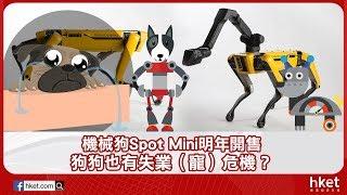 機械狗Spot Mini明年開售 狗狗也有失業(寵)危機?(2018年5月14日)
