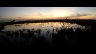Duck hunting songs