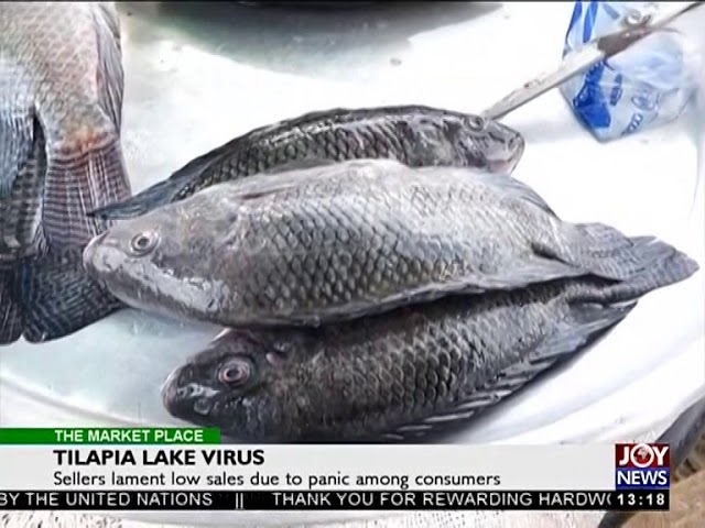 Tilapia Lake Virus - The Market Place on Joy News (9-7-18)