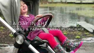 A Day In The Life Of The Mamas & Papas Ocarro