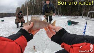 Вот это ОКУНИ Зимняя рыбалка 2020 Крупный окунь на мормышку Республика Коми