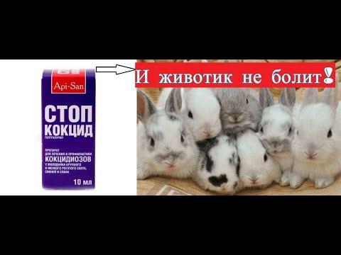 Самая лучшая профилактика кокцидиоза у кроликов!!! Вздулся живот у кролика? Вам сюда всё просто!!!