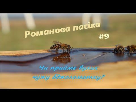 Телеканал Броди online: Романова пасіка. Чи прийме вулик чужу бджоломатку та як зібрати пилок? Випуск №9 (ТК