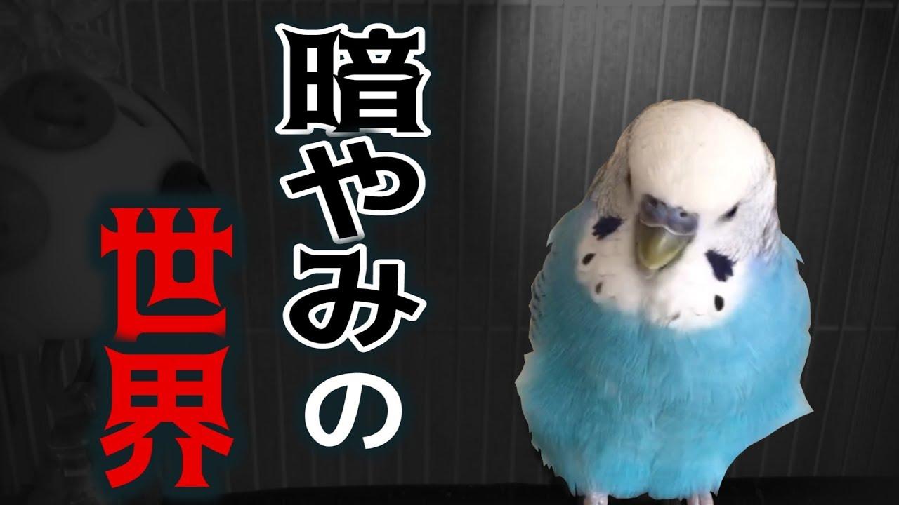 うめ ごま ブラザーズ うめちゃんごまちゃんの二羽のインコが登場『ぴんふ』をご紹介!