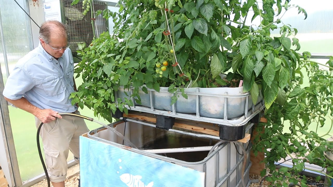 Aquaponics: Growing Fish and Food Sustainably