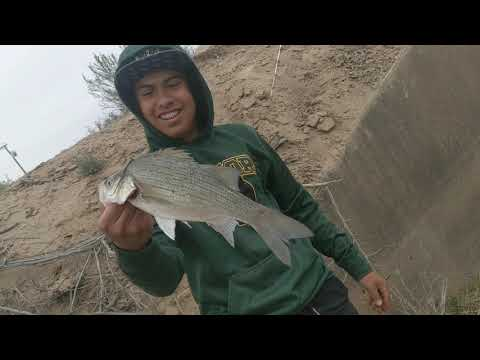 Monster White Bass Fishing Faben Clint and San Elizario Texas Canalas Ditches