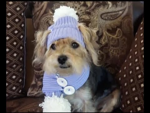How to crochet dog hat and scarf with recycled sweater