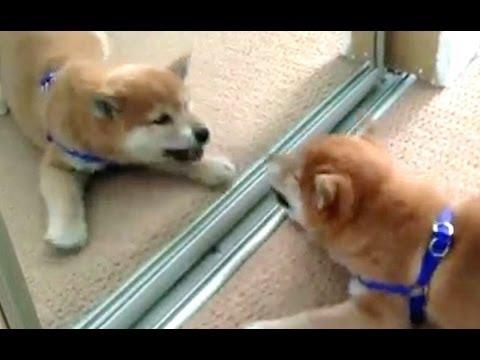 Как лает собачка для детей видео