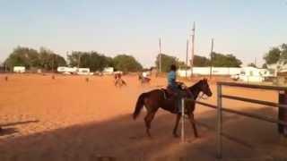 Buckskin Head/heal Horse
