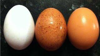 নকল ডিম | নকল ডিম নিয়ে ৩ মিনিটের একটি টিভি রিপোর্ট। ভিডিওটি দেখে হতভম্ব হয়ে যাবেন 2016 | Fake Egg