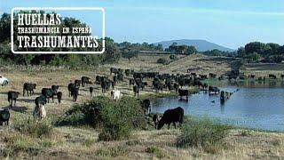 EL CORDEL DE LAS AVILEÑAS. De Extremadura a Gredos