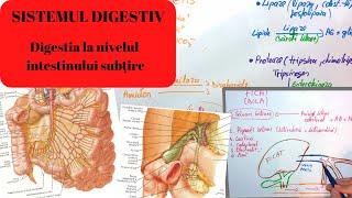 Fondurile paraziților tractului digestiv, Usturoi tinctura - Dacia Plant