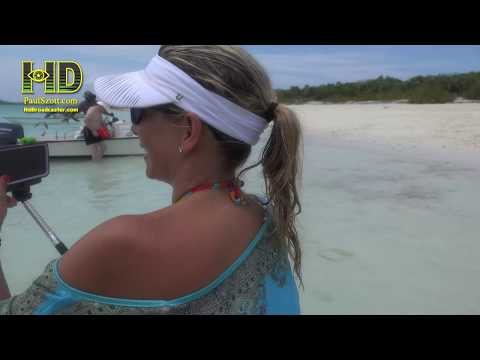 Pig Beach, Pig Island, Big Major Cay, Exuma, Bahamas