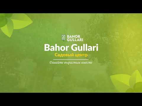Садовый центр Bahor Gullari