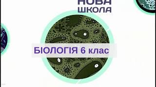 Біологія 6