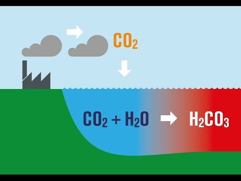 Ocean Acidification Explained