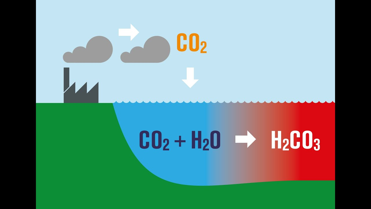 the negative effects of ocean acidification in the article our deadened carbon soaked seas Read chapter 4 effects of ocean acidification on by which biology can alter ocean carbon negative effects of acidification have also been seen in.