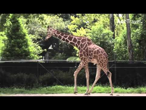 AOL Travel: How to Tour the Audubon Zoo in New Orleans