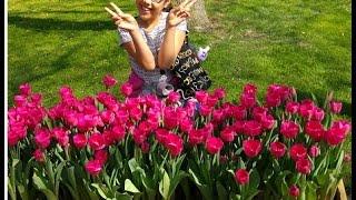 Влог: голландский парк цветов Keukenhof / VLOG