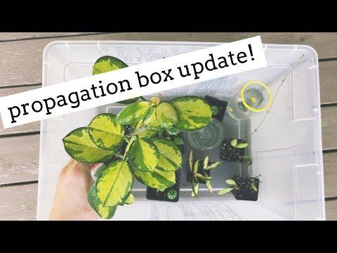houseplant propagation box update!   growth & new roots!