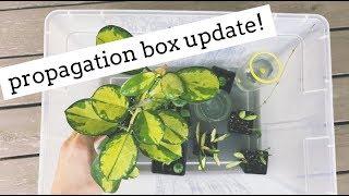 houseplant propagation box update! | growth & new roots!
