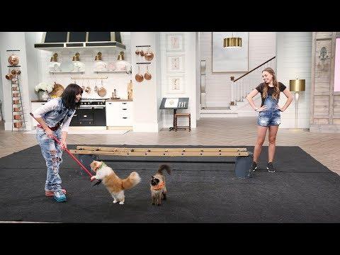 The Savitsky Cats Perform! - Pickler & Ben