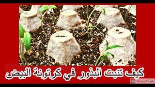 كيفية الإستفادة من كرتونه البيض في زراعة البذور