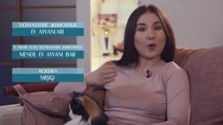 Видеоуроки «Elifbe». Домашние животные