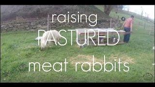 RAISING PASTURED MEAT RABBITS!!!