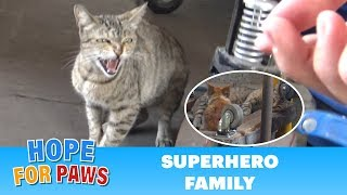 superhero-mom-tells-me-to-back-off-but-her-kittens-were-so-cute