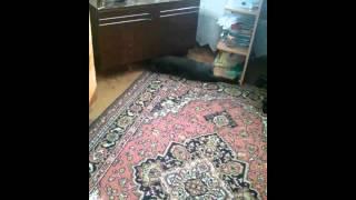 Мой кот не понятно почему трётся об тумбочку2